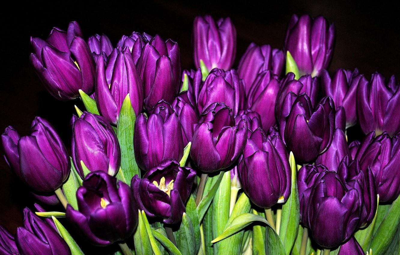 Photo wallpaper bouquet, purple, tulips, buds