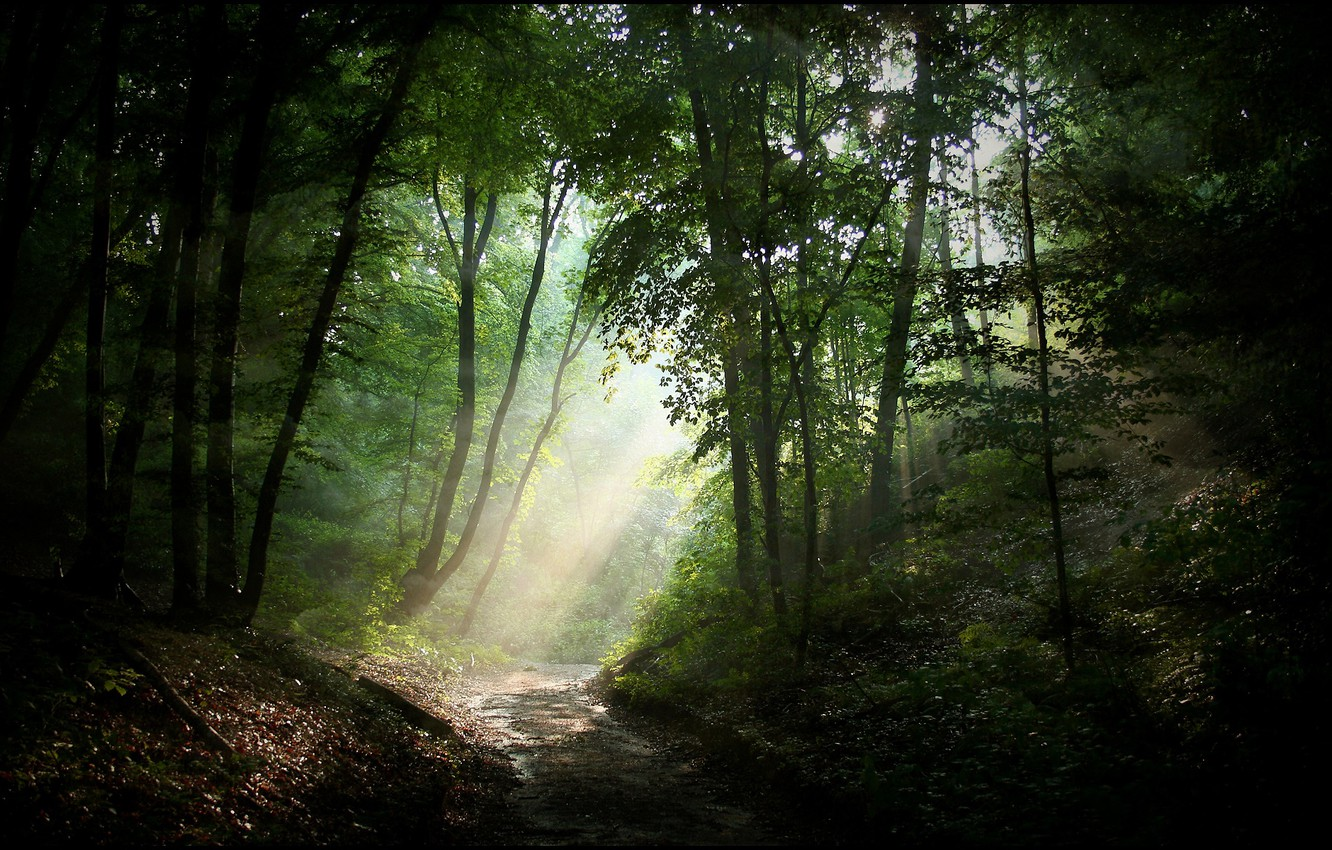 Photo wallpaper road, forest, light, nature