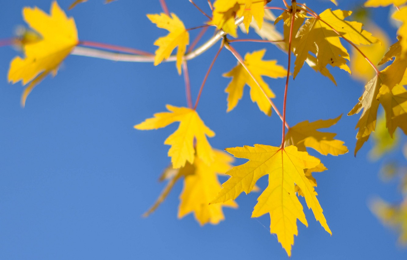 Photo wallpaper autumn, the sky, leaves, branch
