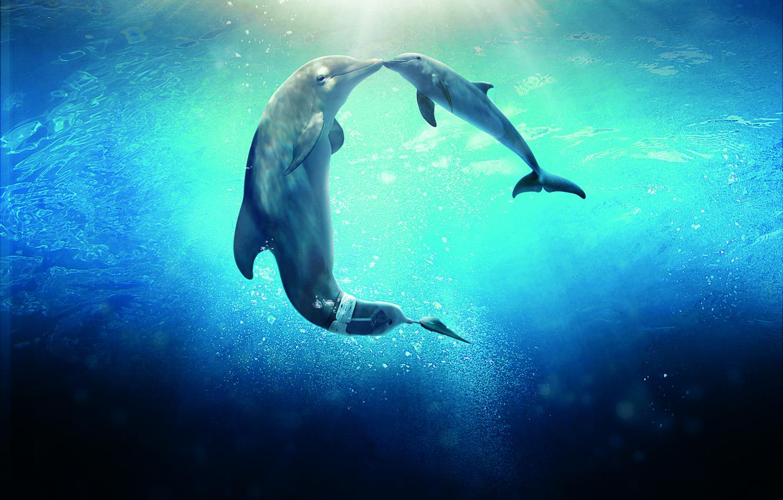 Photo wallpaper Dolphin, Sun, Water, Line, Wallpaper, Family, Ocean, Year, Sea, Morgan Freeman, Movie, Film, 2014, Animals, …
