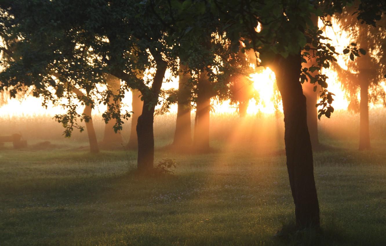 Photo wallpaper greens, forest, summer, grass, the sun, rays, light, trees, nature, dawn, morning, garden