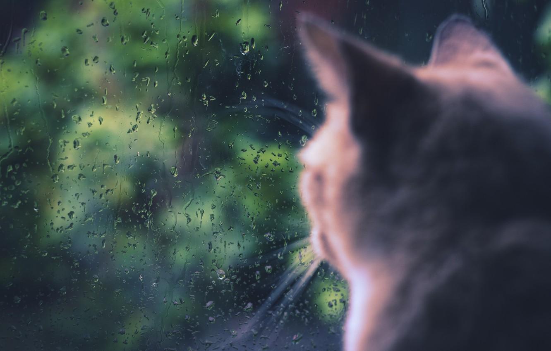 Photo wallpaper cat, cat, rain, window, sitting