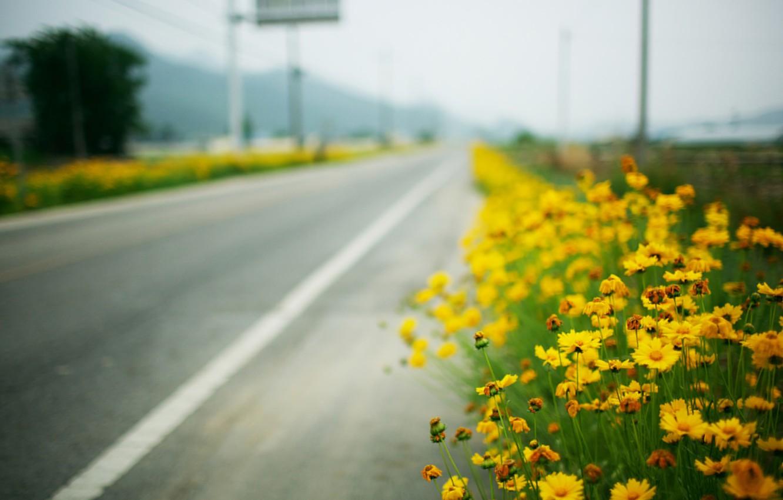 Photo wallpaper road, macro, roadside, yellow flowers