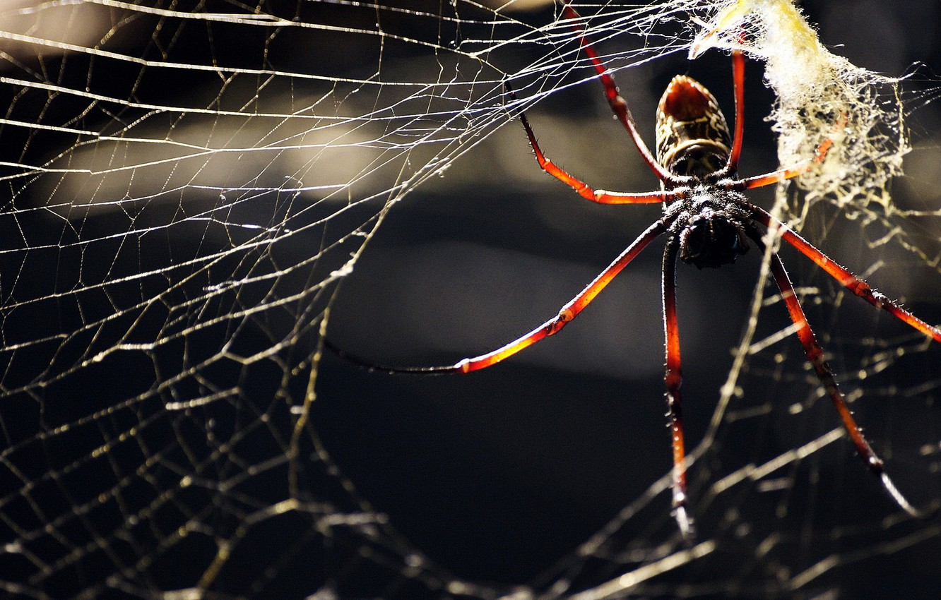 Photo wallpaper WEB, INSECT, LEGS, SPIDER