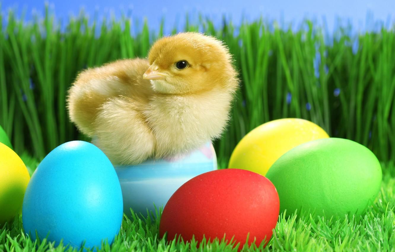 Photo wallpaper grass, eggs, Easter, chicken