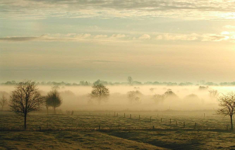 Photo wallpaper field, trees, fog