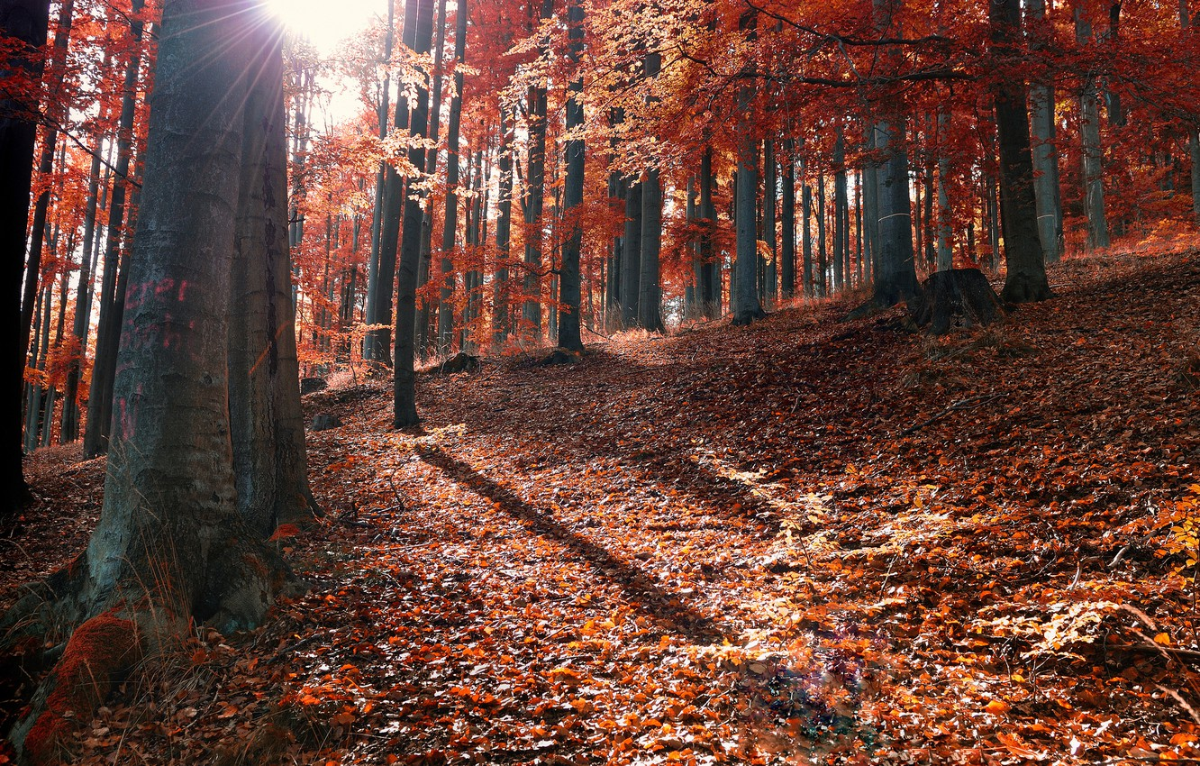 Photo wallpaper autumn, forest, leaves, the sun, rays, fallen