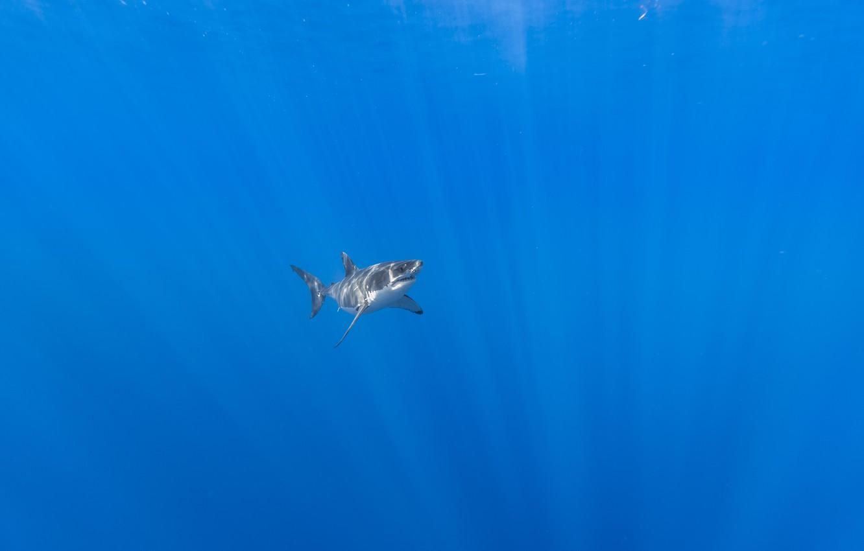 Photo wallpaper sea, nature, shark