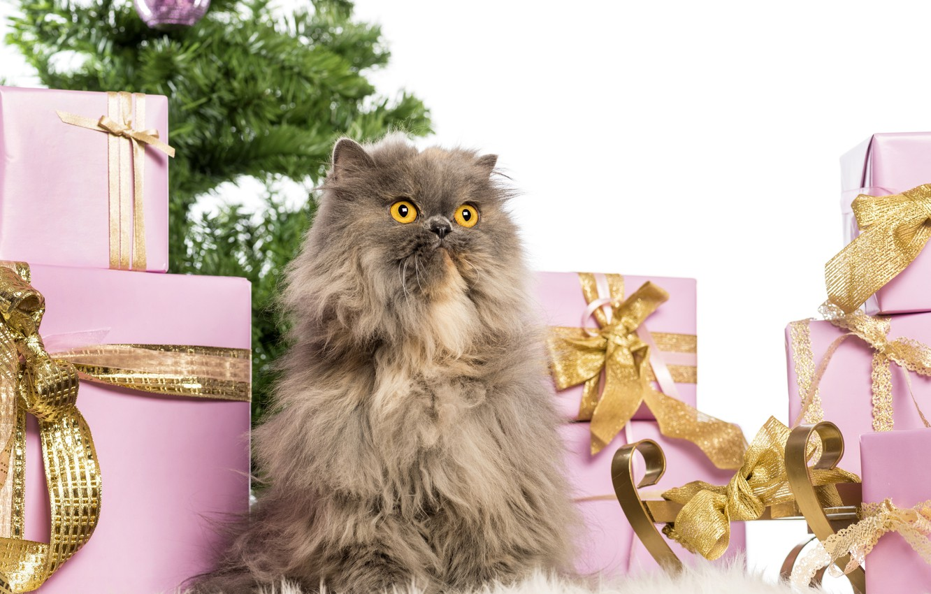 Photo wallpaper cat, fluffy, pers, gifts, New year, box