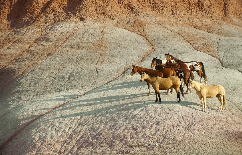 Photo wallpaper stone, horse, shadows, the herd