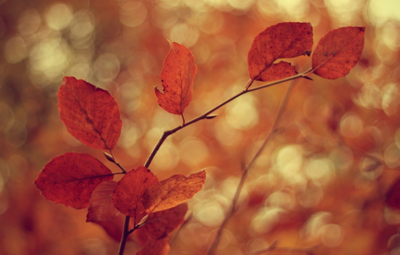 Photo wallpaper cold, autumn, leaves, branches, tree, the wind, branch, foliage, leaf, focus, blur, branch, leaves, leaf, …