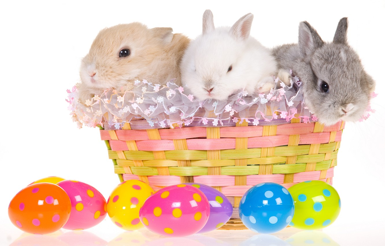 Photo wallpaper basket, egg, Easter, rabbits, easter