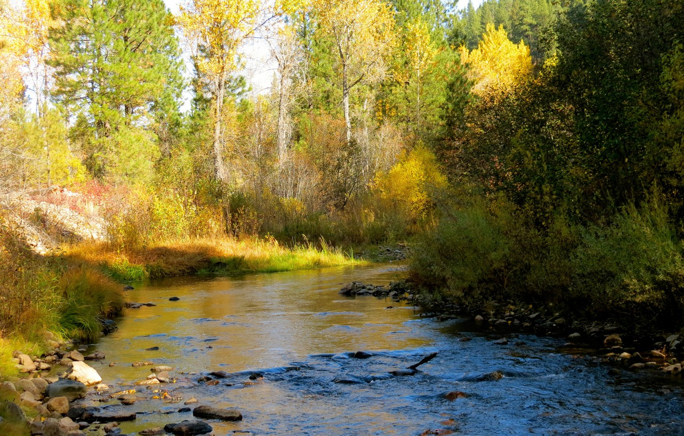 Photo wallpaper autumn, forest, the sky, trees, river, stones