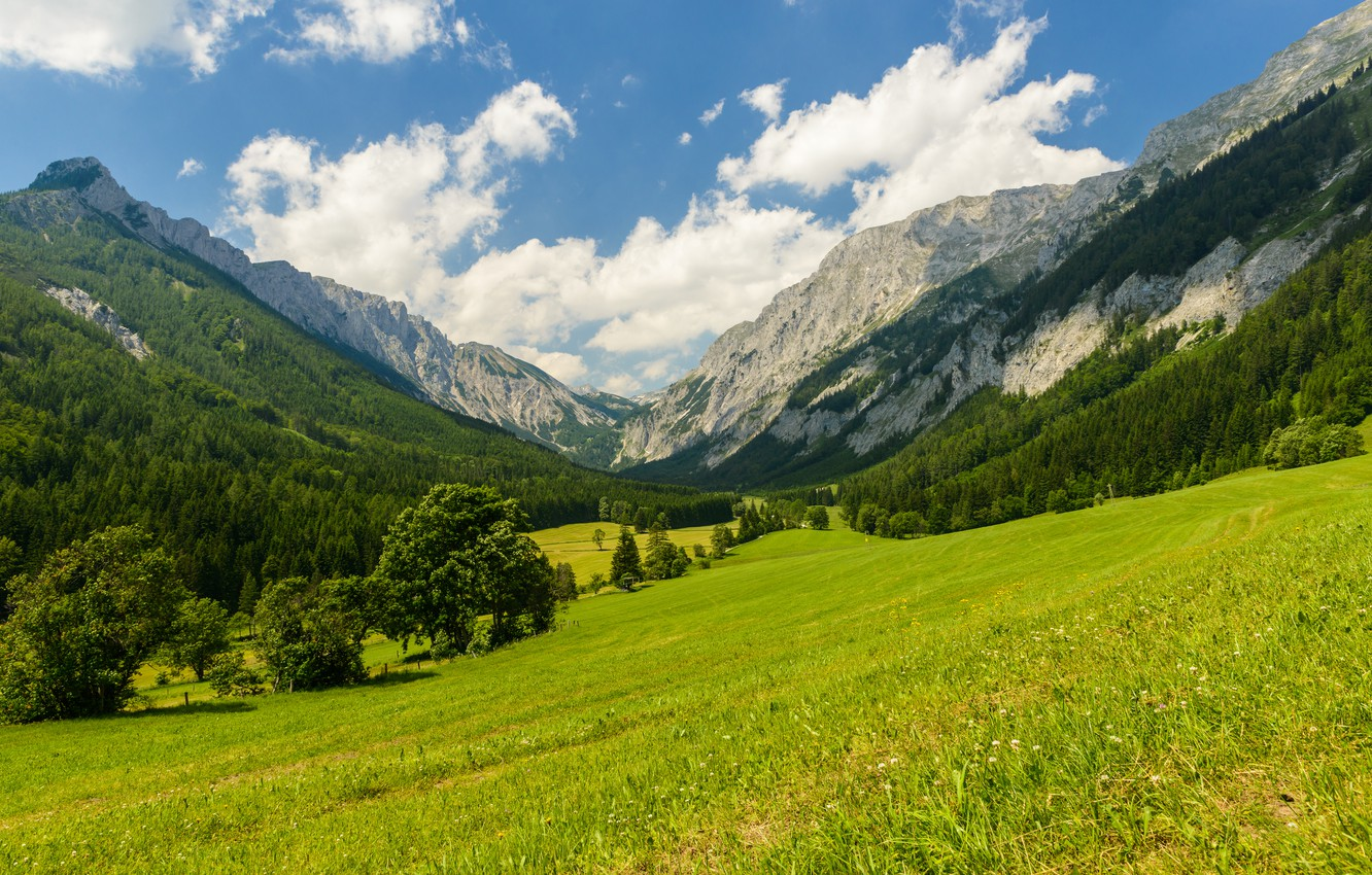 Photo wallpaper trees, mountains, nature, clearing, trees, nature, mountains, meadow