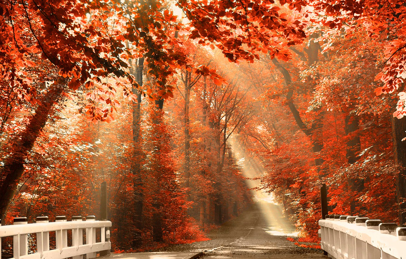 Photo wallpaper ROAD, FOREST, NATURE, TOMANCE, LEAVES, COLOR, LIGHT, TREES, BRIDGE, BRANCHES, RAYS, ORANGE, AUTUMN, FOLIAGE, The …