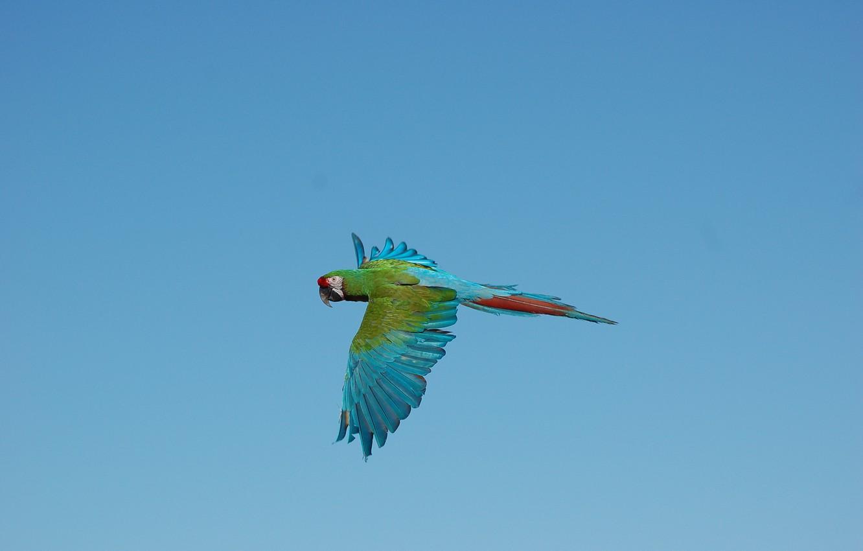 Photo wallpaper the sky, flight, wings, Ara