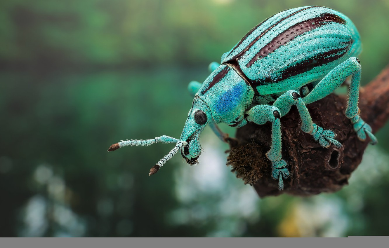 Photo wallpaper nature, paint, beetle, insect