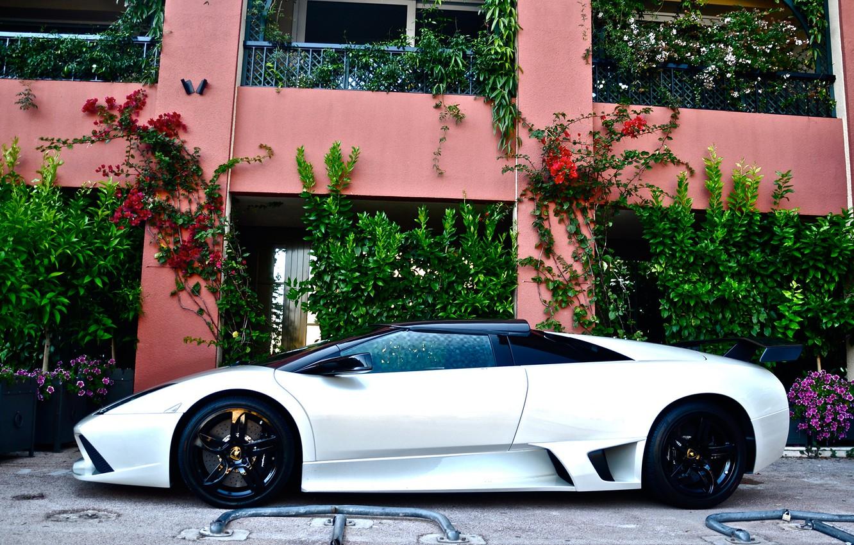 Photo wallpaper white, Lamborghini, white, Lamborghini, murcielago