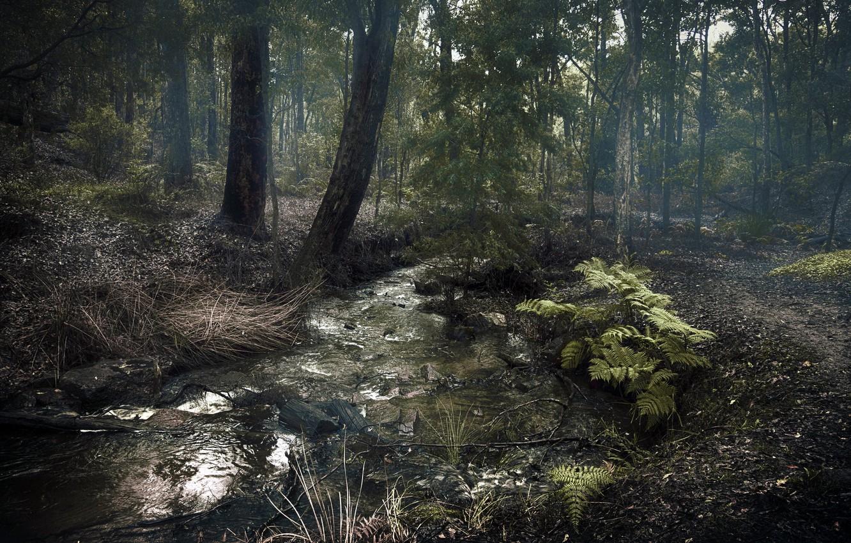 Photo wallpaper forest, landscape, nature