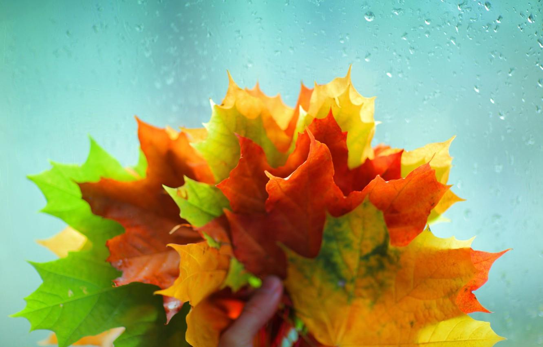 Photo wallpaper autumn, glass, leaves, water, macro, yellow, red, green, background, rain, Wallpaper, hand, wallpaper, leaves, widescreen, …