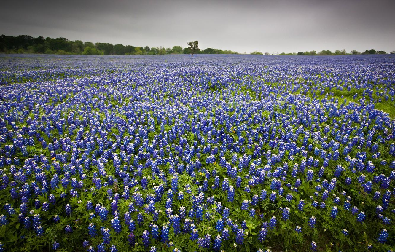 Photo wallpaper field, landscape, flowers, nature