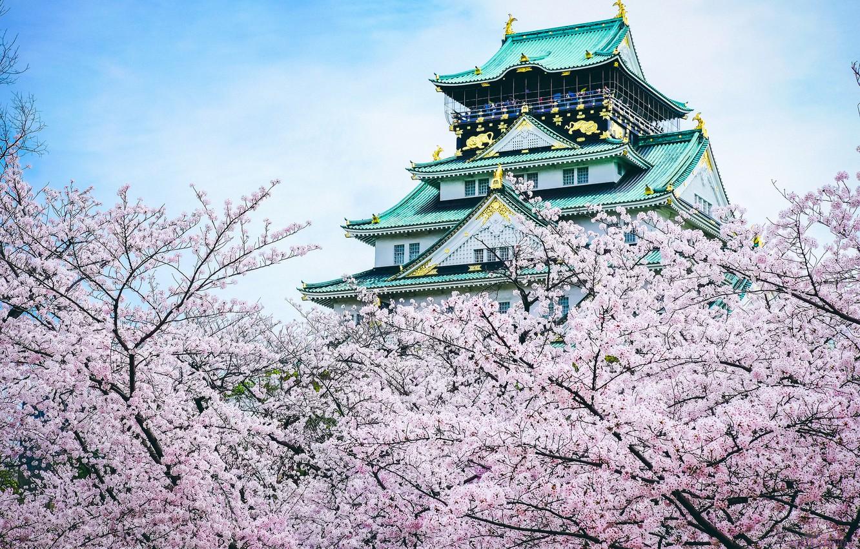 Photo wallpaper castle, Japan, Sakura, pagoda