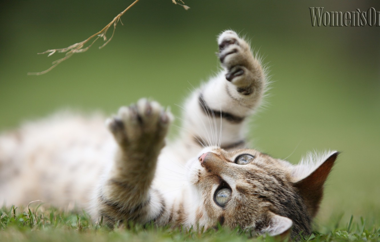 Photo wallpaper cat, cute, striped, risacca