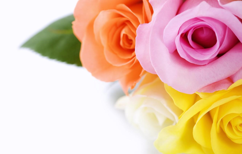 Photo wallpaper macro, flowers