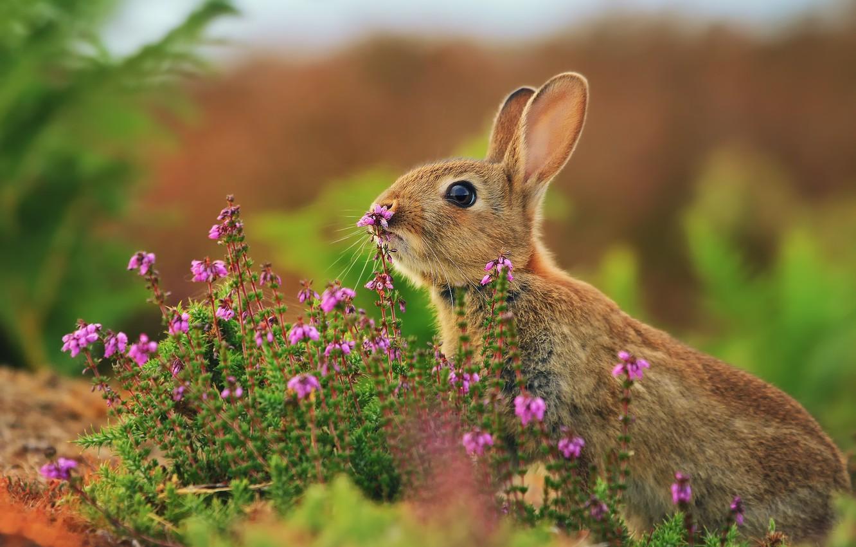Photo wallpaper grass, flowers, hare, rabbit, razmytost