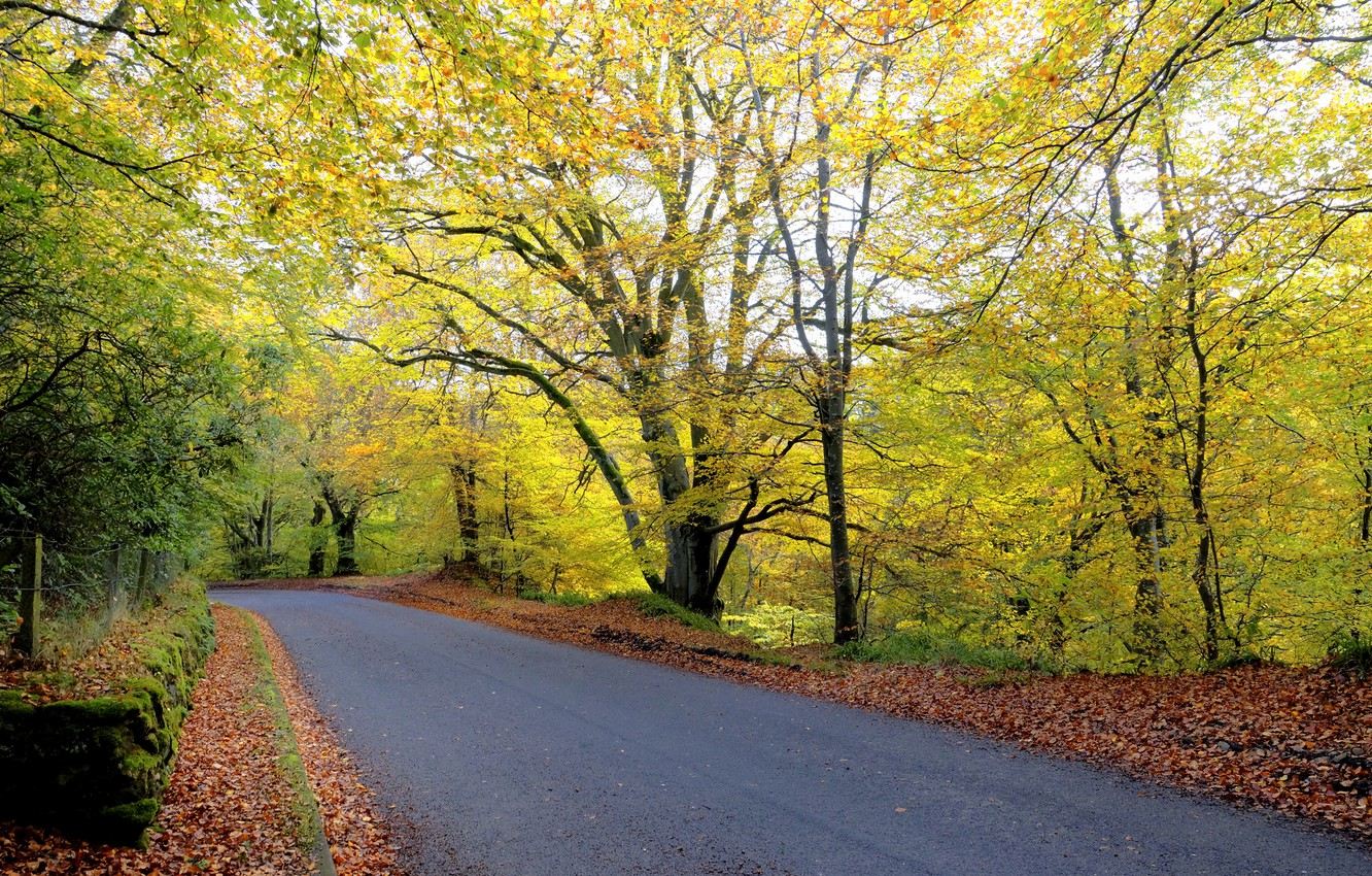 Photo wallpaper road, autumn, forest, leaves, trees