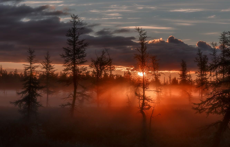 Photo wallpaper the sun, rays, trees, fog, twilight, Sunrise, glow