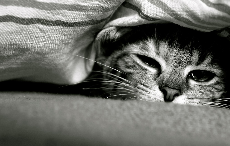 Photo wallpaper cat, look, Cat