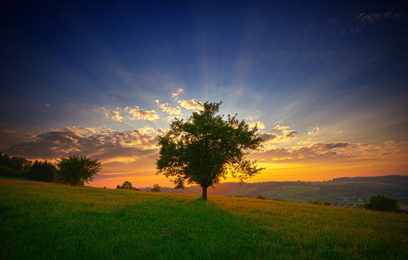 Photo wallpaper greens, summer, the sky, grass, the sun, clouds, rays, landscape, flowers, freshness, nature, tree, dawn, …