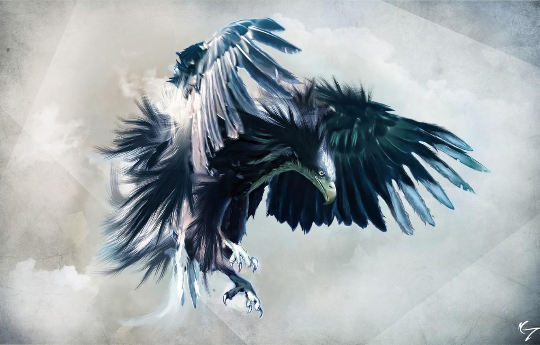 Photo wallpaper look, flight, eagle