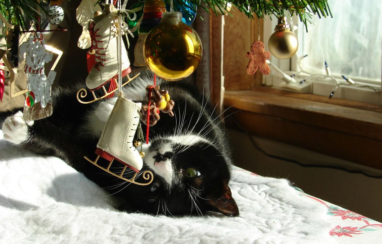 Photo wallpaper winter, cat, toys, new year, spruce, window, tree