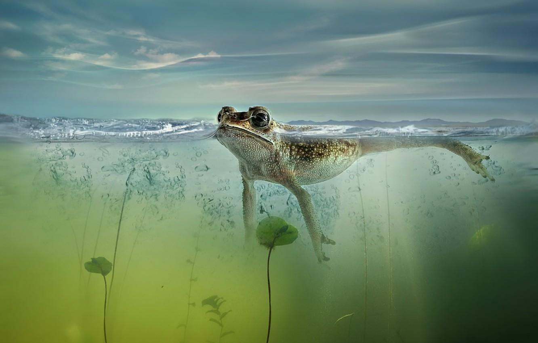 Photo wallpaper nature, pond, frog