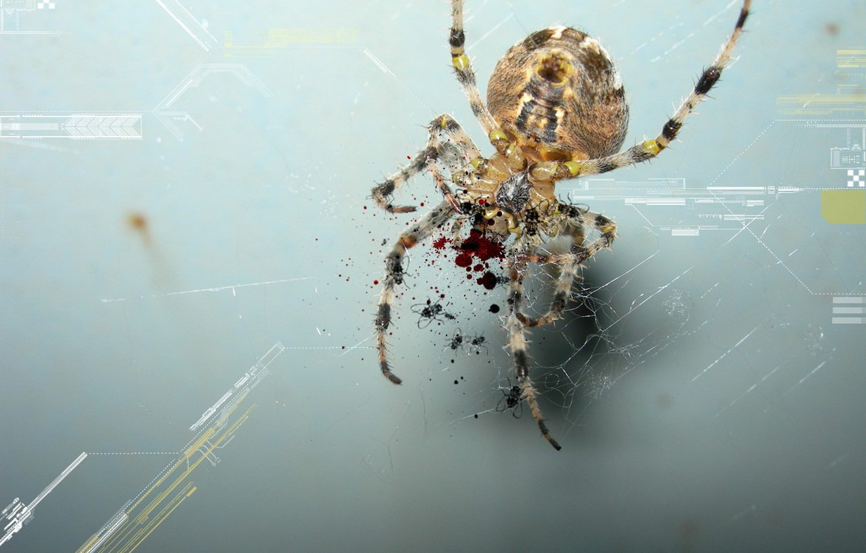 Photo wallpaper blood, treatment, Spider