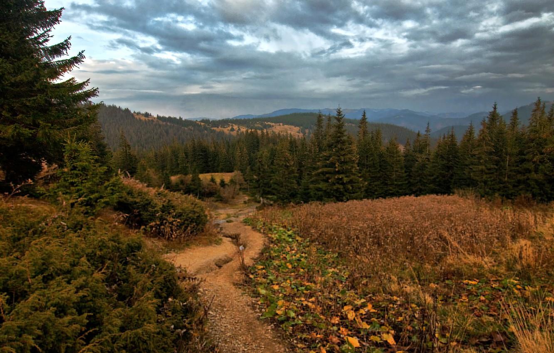 Photo wallpaper forest, grass, trees, mountains, clouds, glade, Ukraine, Vorokhta, Vorokhta