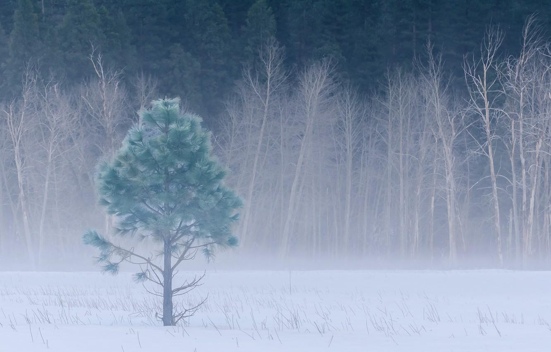 Photo wallpaper winter, forest, snow, trees, fog, glade, CA, USA, USA, Yosemite, forest, trees, California, winter, snow, …