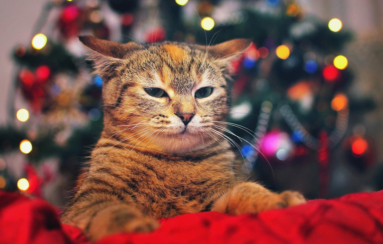 Photo wallpaper cat, look, lights, tree, ears