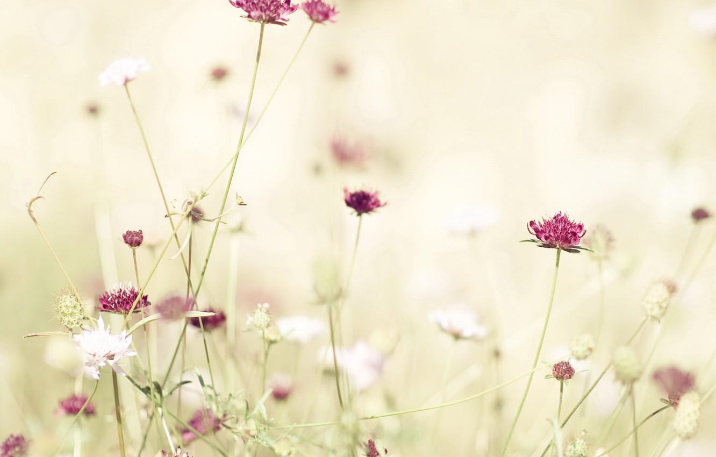 Photo wallpaper flower, light, red