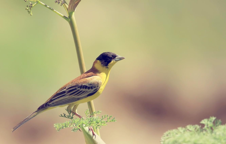 Photo wallpaper background, Wallpaper, branch, Bird, bird, yellow, wallpapers, blurred
