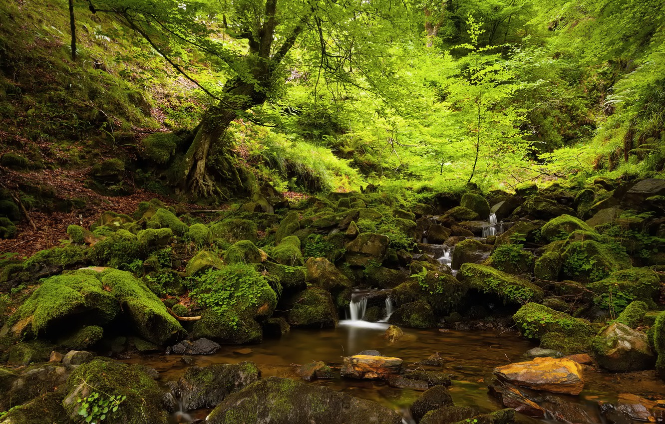 Photo wallpaper forest, summer, trees, nature, stream, stones, moss, shadow