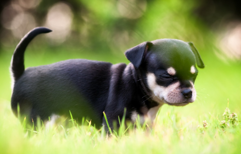 Photo wallpaper light, dog, puppy