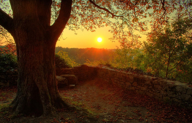 Photo wallpaper the sun, nature, tree, mood