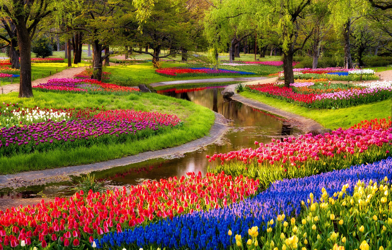 Photo wallpaper trees, flowers, pond, Park, sunrise, tulips, colorful, trees, blue, park, flowers, beautiful, tulips, Muscari, spring, ...