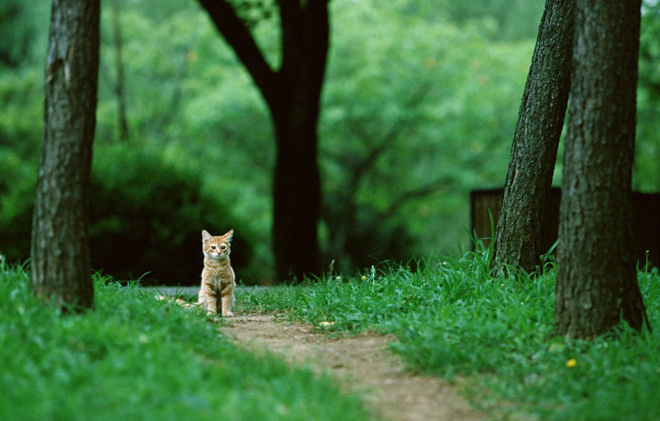Photo wallpaper forest, cat, grass, cat, trees, nature, kitty, trail, red, sitting, cat