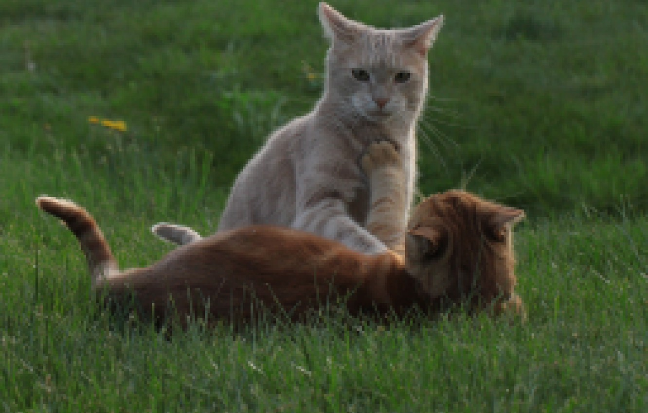 Photo wallpaper cat, grass, cat, the game, red