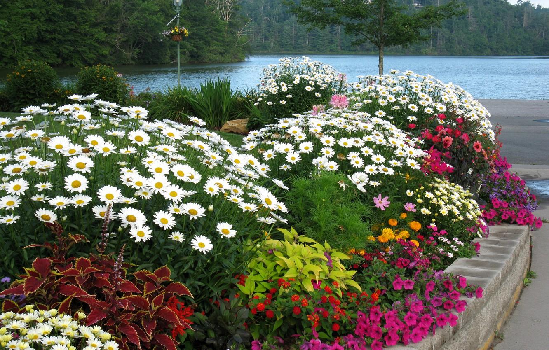 Photo wallpaper trees, landscape, flowers, nature, river, chamomile, lantern, flowerbed, promenade, Petunia, zinnia, Coleus