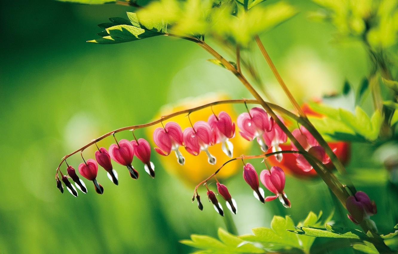 Photo wallpaper flower, drops, Rosa, pink, greens